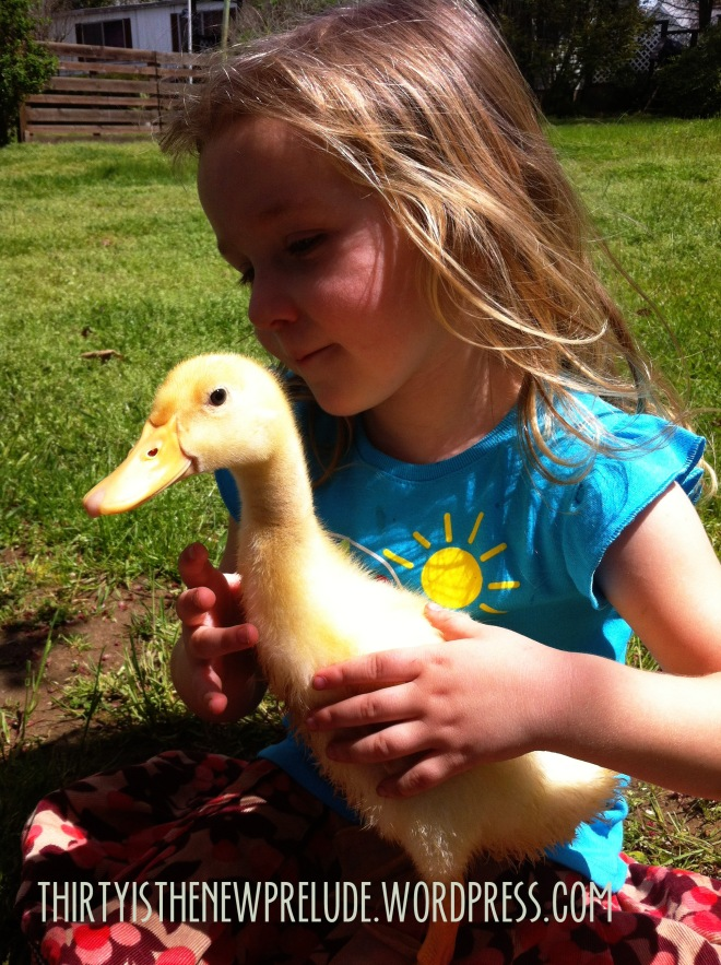 maeby with duckling